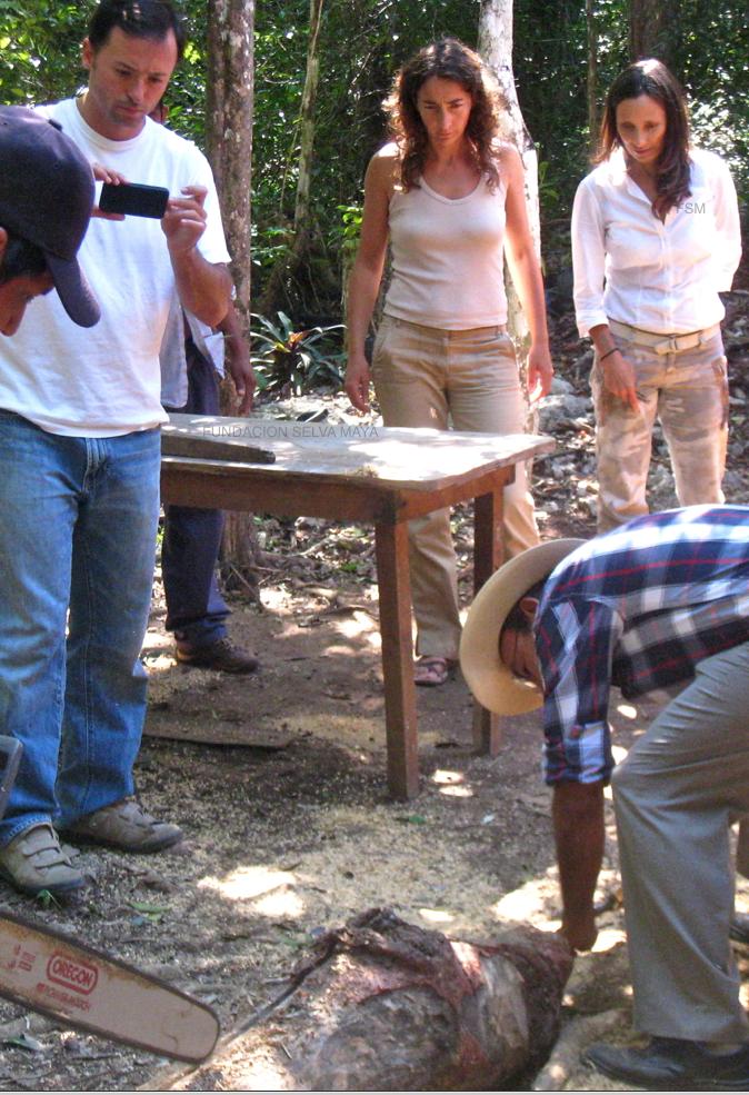 Aprendiendo a transferenciar colmenas