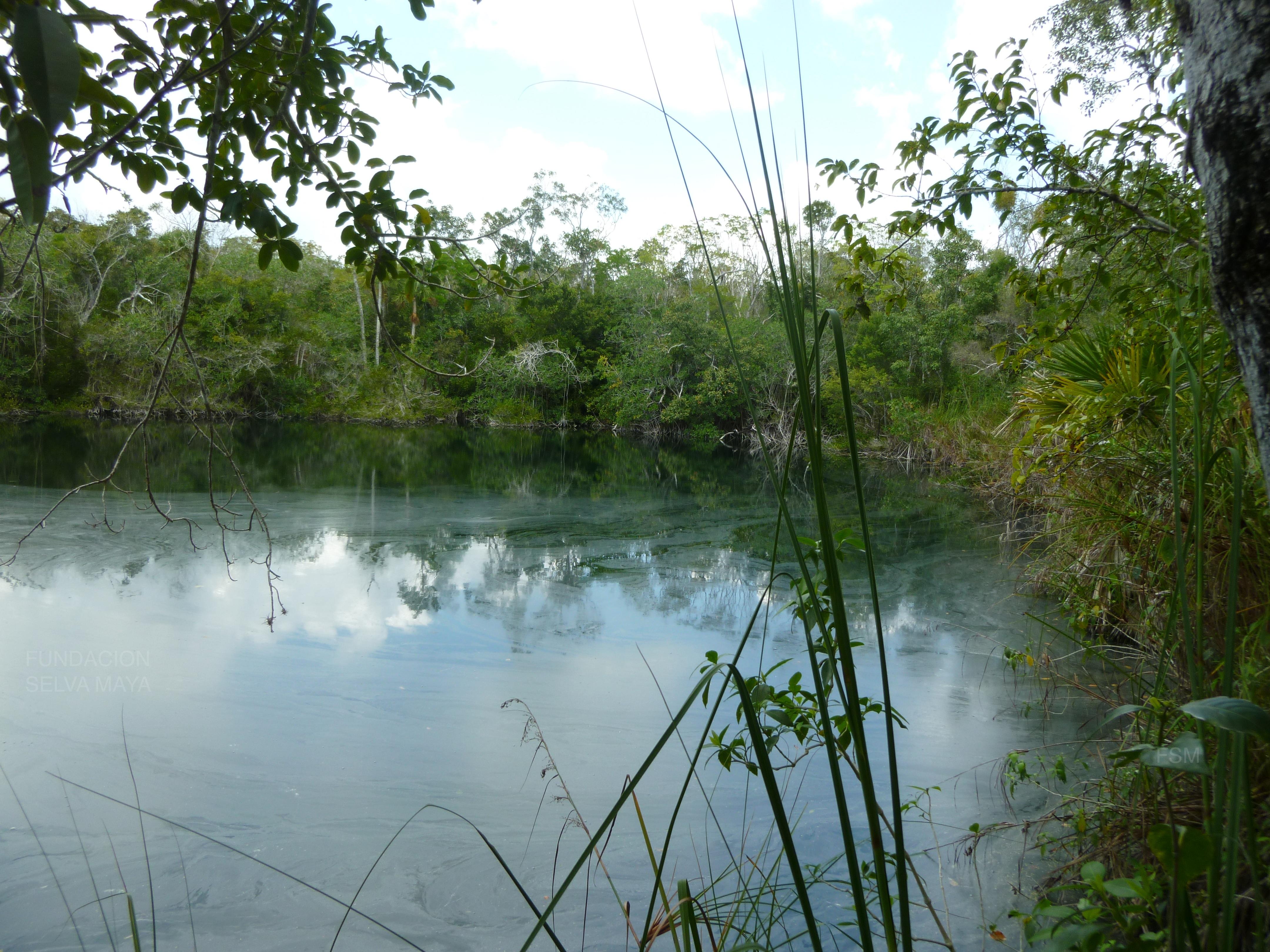 Exploración – Fundacion Selva Maya
